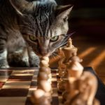 A cat engaged in chess